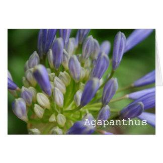 Agapanthus Blank Greeting Card