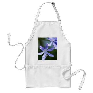 Agapanthus blooms apron