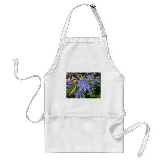 Agapanthus blooms standard apron