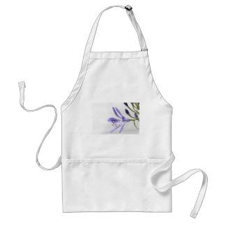 agapanthus standard apron