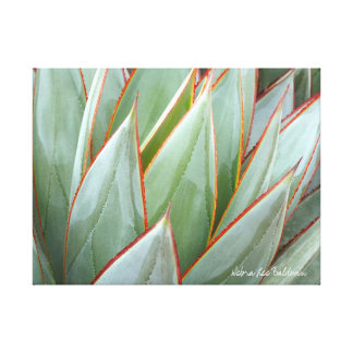 Agave 'Blue Glow' canvas by Debra Lee Baldwin