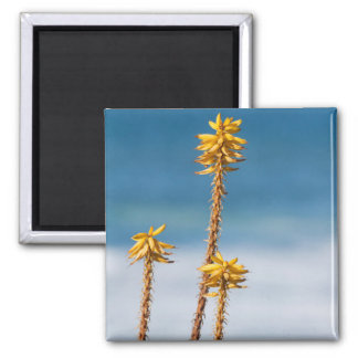 Agave by the ocean square magnet