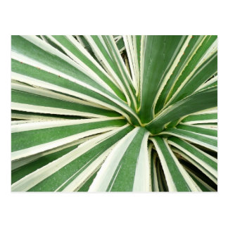 Agave Plant Green and White Stripe Postcard