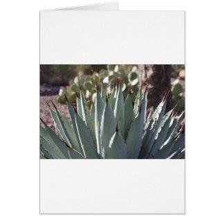 Agave Spikes Card