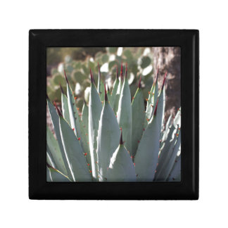 Agave Spikes Gift Box
