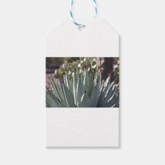 Agave Spikes Gift Tags
