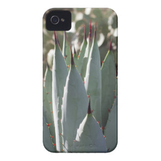 Agave Spikes iPhone 4 Cover