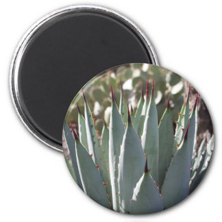 Agave Spikes Magnet