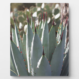 Agave Spikes Plaque