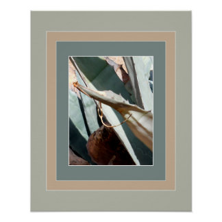 Agave tequilana plant Sonoran Desert print