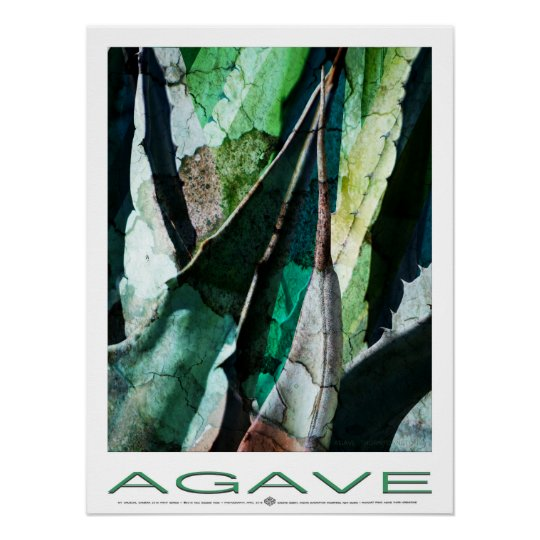 Agave Thorn Grenstone Poster