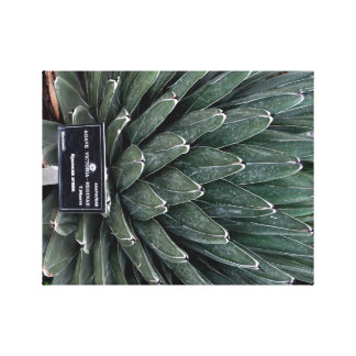 Agave Victoria Plant Photo Wrapped Canvas Print