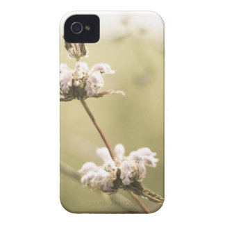 aged9 Case-Mate iPhone 4 case