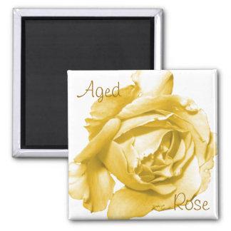 Aged Rose Square Magnet