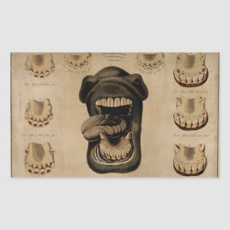 Ages of The Horse Mouth Teeth Etching Watercolor