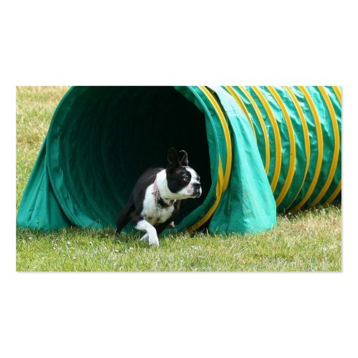 Agility Boston Terrier business cards