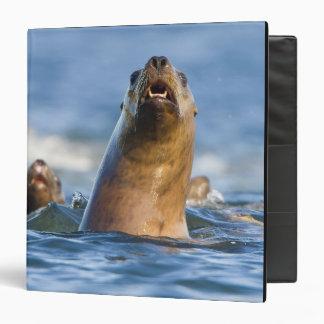 Agressive Stellar Sea Lions Eumetopias 3 Ring Binder