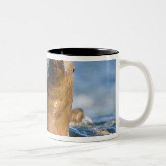 Agressive Stellar Sea Lions Eumetopias Coffee Mugs
