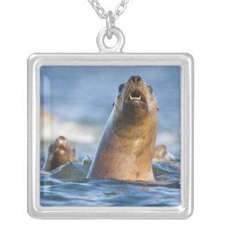 Agressive Stellar Sea Lions Eumetopias Jewelry