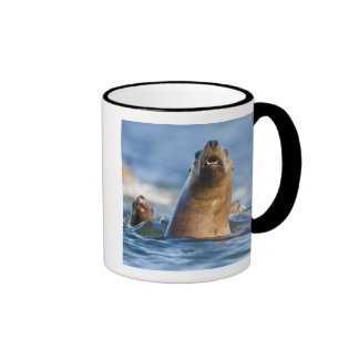 Agressive Stellar Sea Lions Eumetopias Mug