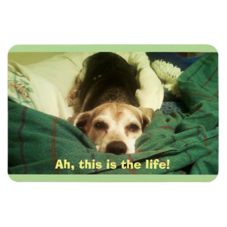 """Ah, This Is the Life!"" Beagle 4x6 Fridge Magnet"
