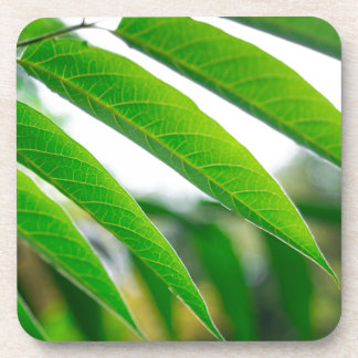 Ailanthus branch with narrow leaves drink coaster