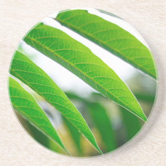 Ailanthus branch with narrow leaves drink coasters