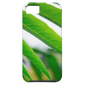 Ailanthus branch with narrow leaves iPhone 5 cases