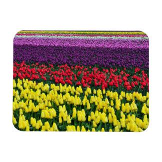 Aimant coloré de tulipes de ressort magnets