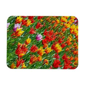 Aimant coloré d'impression de tulipes de ressort magnet en vinyle