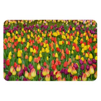 Aimant coloré d'impression de tulipes de ressort magnets souples