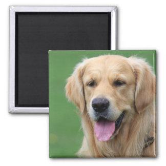 Aimant de chien de golden retriever cadeau actuel
