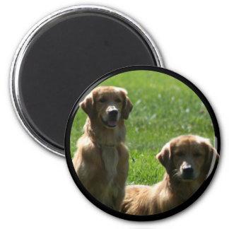 aimant de chiens d arrêt d or