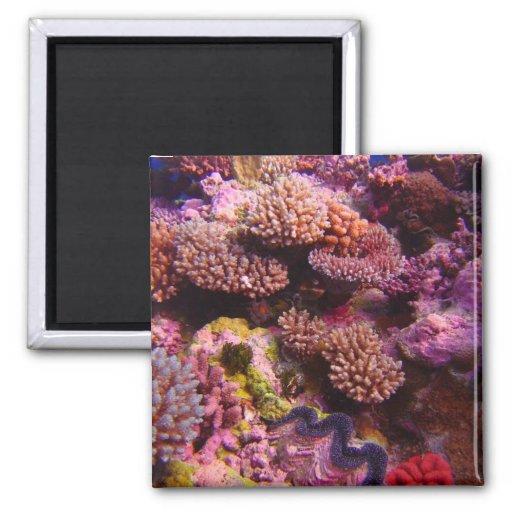 Aimant de corail de carré de jardin