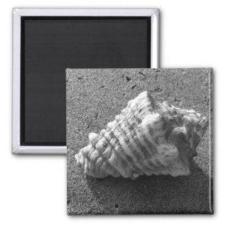 Aimant de plage de sable de coquillage de conque
