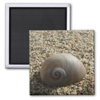 Aimant de Shell de mer