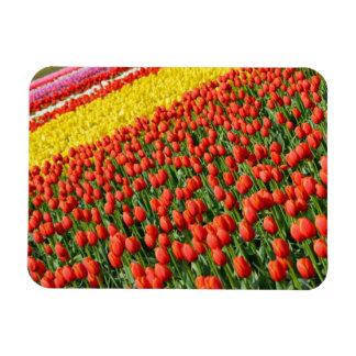 Aimant d'impression de tulipes de ressort magnets en vinyle