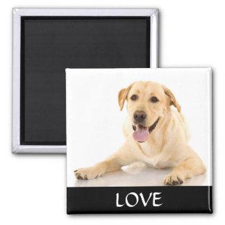 Aimant jaune de Labrador Retreiver d'amour
