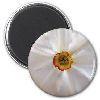 Aimant narcisse de blanc de perle