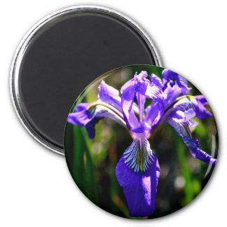 Aimant pourpre sauvage d'iris