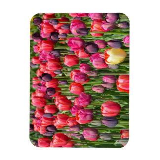 Aimant rose de tulipes de ressort magnets souples