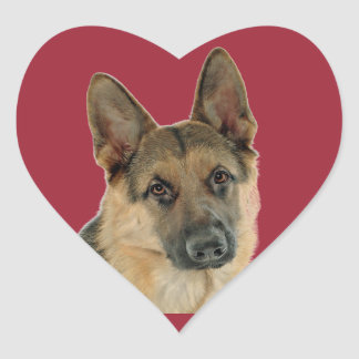 Aimé et protégé par un berger allemand sticker cœur