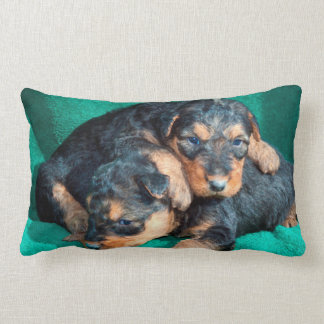 Airedale puppies lying on towel lumbar pillow