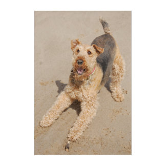 Airedale terrier acrylic wall art