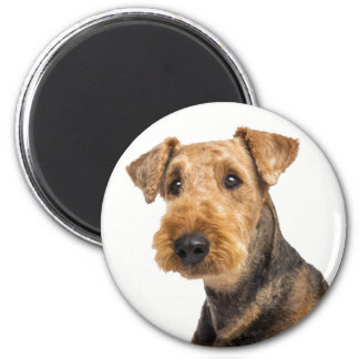 Airedale Terrier Brown & Black Puppy Dog Magnet