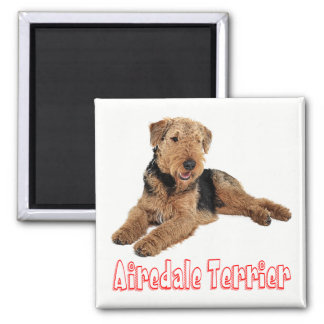 Airedale Terrier Brown & Black Puppy Dog Red Love Magnet