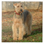 Airedale Terrier Dog Photo Tile Large Square Tile