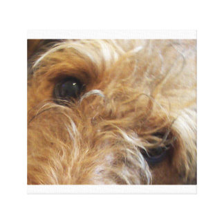 airedale terrier eyes canvas print