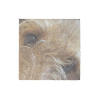 airedale terrier eyes stone magnets