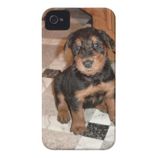 Airedale Terrier Puppy Case-Mate iPhone 4 Cases